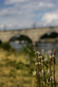 Weeds in front of bridge