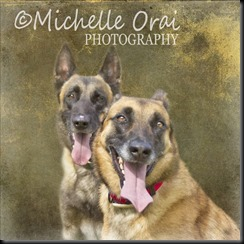 Sylvies Dogs
