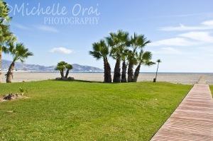 Grass on the beach, honest!!!