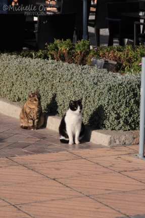 Nerja cats take it easy in the sun