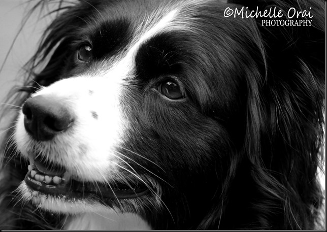 Tess4black and white
